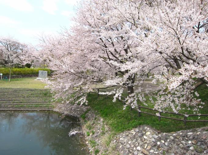 加治川桜まつり | しばた観光ガイド